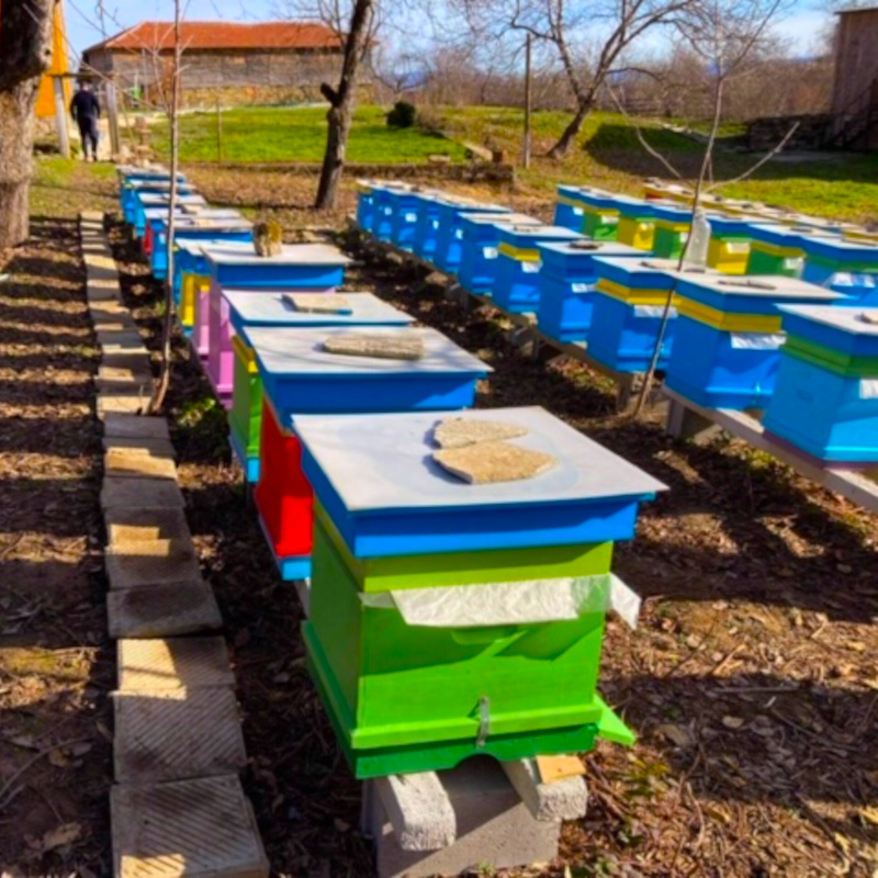 Our colorful bee hives